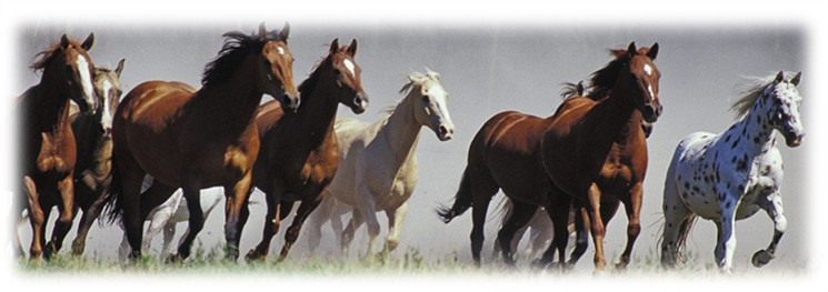 Horses Running Picfeather3
